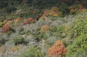 autunno a Tolfa